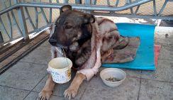 В Ростове собака-попрошайка в шубе набирает «лайки» в интернете