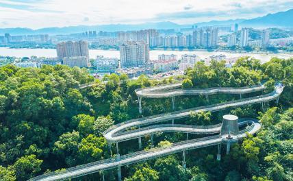 «Для прекрасной Родины»: Почему в Китае сажают деревья, а в России вырубают и жгут