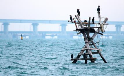 «Керченский прорыв» 2.0: Зеленский ждет от кораблей НАТО поддержки огнём