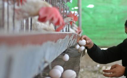 Власть собирается ударить дачников штрафами по яйцам
