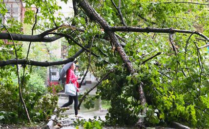 Буря повалила в Москве 170 деревьев