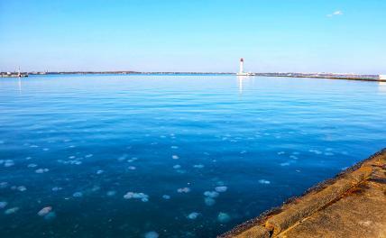 Украинские курорты впервые устанавливают сети, чтобы спастись от медуз