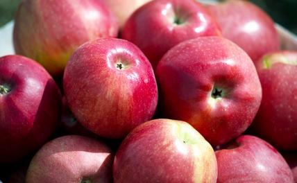 Эксперт предупредил об опасности чрезмерного употребления фруктов