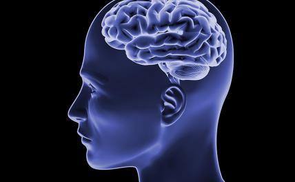 Выяснилось, какие продукты улучшают работу мозга