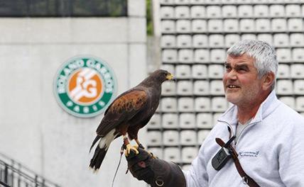 В Париже на птицу мира спустят соколов
