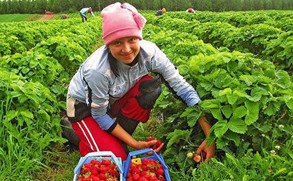 В Чехии упрощают трудоустройство украинцев