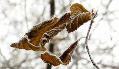 В европейскую часть России пришли заморозки