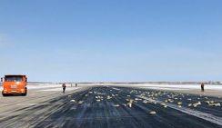 Золото рассыпалось над аэропортом Якутска