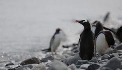 Исчезла озоновая дыра над Антарктидой