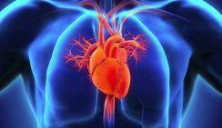 Ученые назвали полезный для сердца напиток