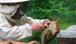 Без пчел, без меда и без триллиона - по воле безалаберных аграриев