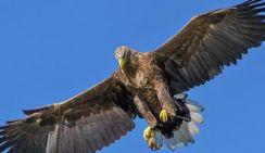 Названо лучшее средство защиты аэропортов от птиц