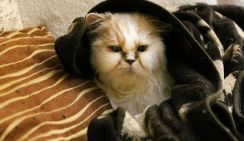 В Китае запускают массовую продажу клонированных котов
