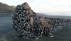 На берегу Новой Зеландии обнаруженный необычный объект