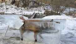 """Лиса упала в реку и превратилась в """"ледяную скульптуру"""""""