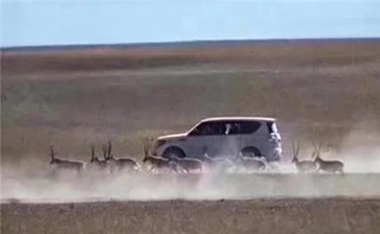 Погоня за тибетскими антилопами оценена штрафом