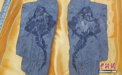 Обнаружены останки летающего млекопитающего Юрского периода