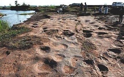 В Китае обнаружили 300 следов динозавров