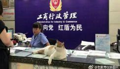 Кот стал звездой в отделе промышленности и торговли
