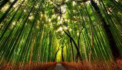 Площадь искусственного леса в Китае заняла первое место в мире