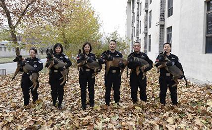 Пекинская полиция впервые использует клонированных собак
