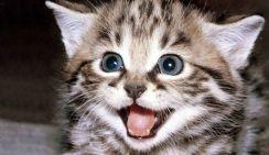 Жестокое убийство котенка под Самарой стало причиной локальных волнений