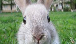 Краснодарец украл из супермаркета 8 продуктовых тележек для своих кроликов