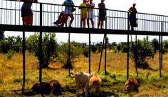 В Сочи туристов завлекают страусом в крови