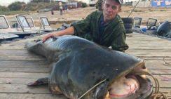Астраханский рыбак выловил гигантского сома