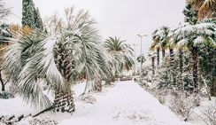 В Сочи выпал снег в 15 см, а Кубань заливают ливни