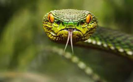 На Ставрополье расплодились опасные змеи
