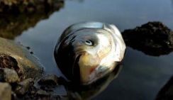 В Астрахани берег Волги усыпан дохлой рыбой